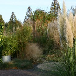 Grassentuin in de nazomer