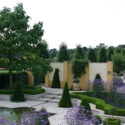 Plaza Alhambra met ijzerhart, Verbena