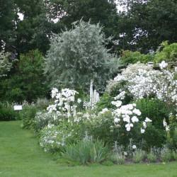 Vaste plantenborder in wit
