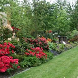 Veentuin met bloeiend rododendrons en azalea's