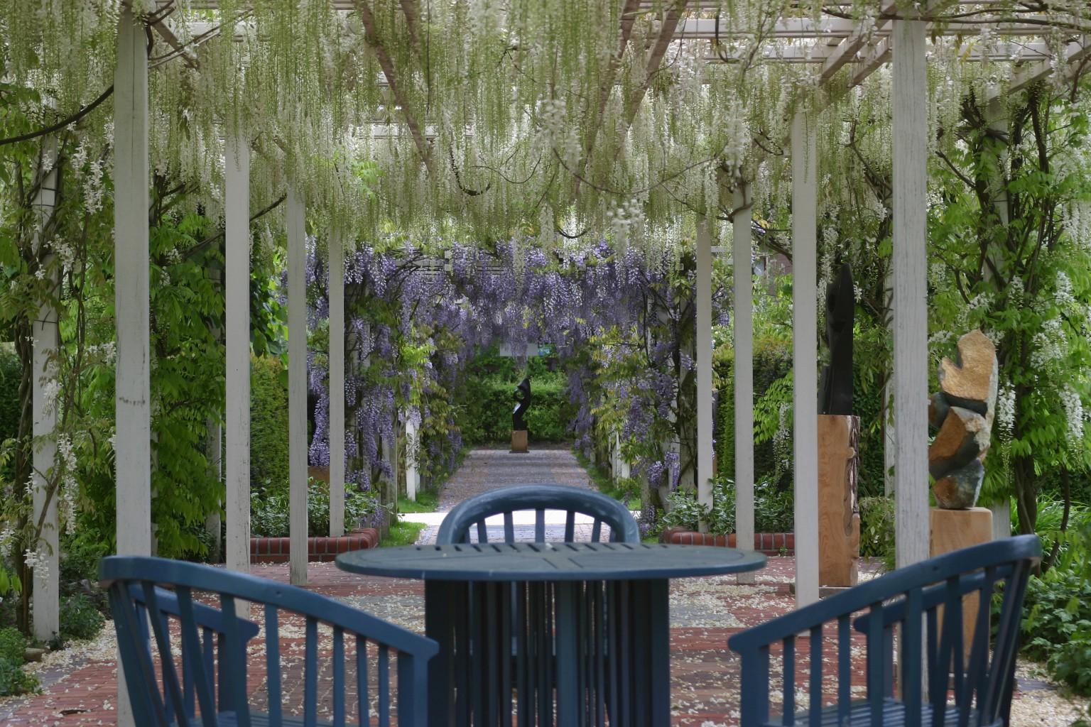 Houten pergola met blauweregen kijktuinen nunspeet - Scheiding houten ...