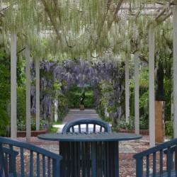 Doorkijk houten pergola met witteregen