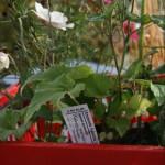 Planten zijn voorzien van een steeketiket met eigenschappen