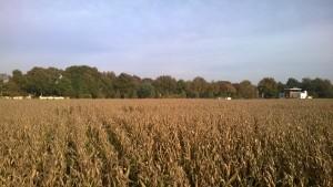 Uitzicht vanaf uitkijkpunt in maisdoolhof