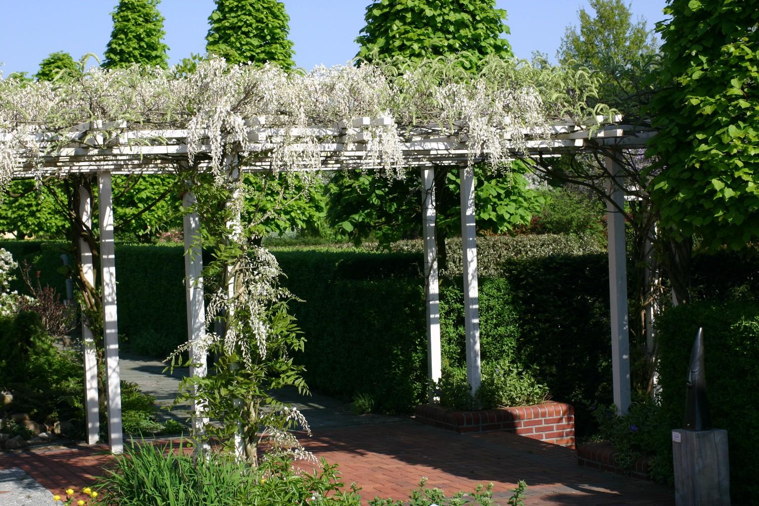 Houten pergola met blauweregen kijktuinen nunspeet - Terras met houten pergolas ...