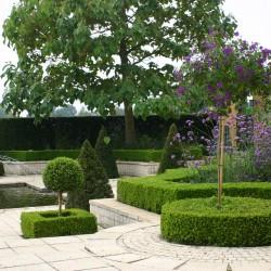 Plaza Alhambra Solanum