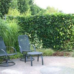 Relaxstoelen in de grassentuin