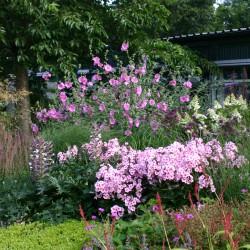 Vaste planten border in diverse kleuren