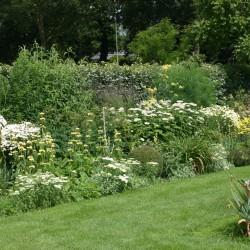 Vaste planten border in gele tint