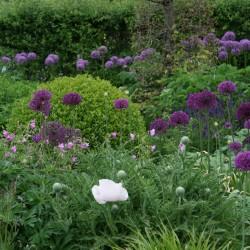 Vaste planten border met allium's