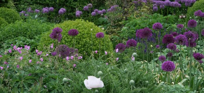 Vaste planten borders op kleur