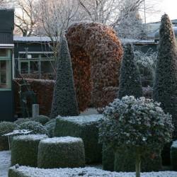 Voorhof in de winter
