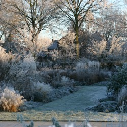 Winter in de vaste planten borders